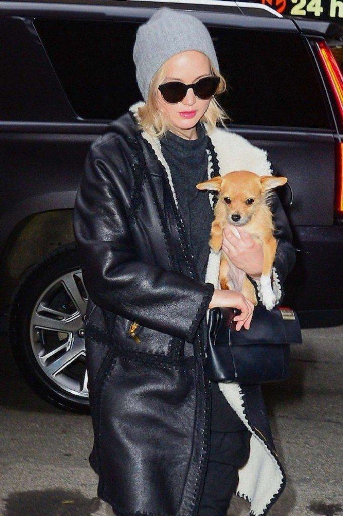 Дженифер Лоуренс показала маленькую собачку и мальчуковый стиль