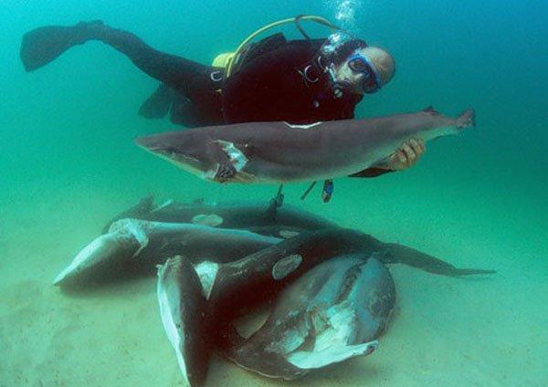 Хью Джекман чуть не стал жертвой акулы
