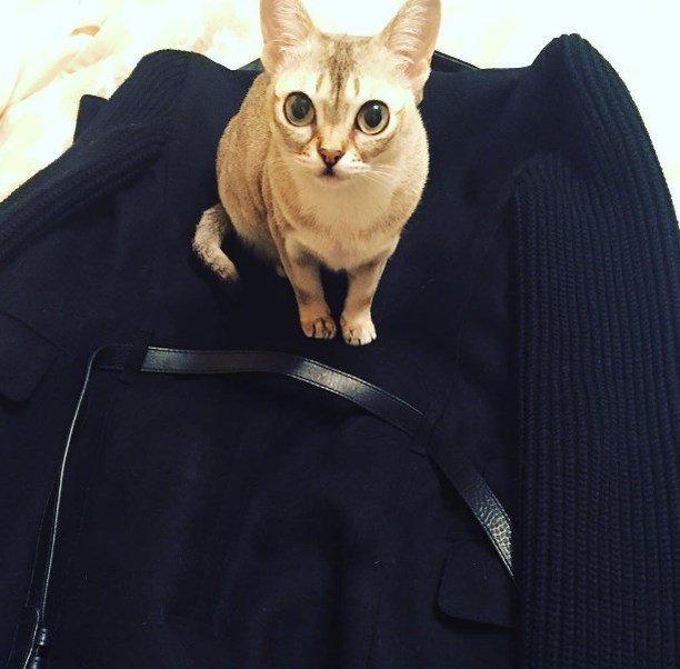 Кошка Анжелики Варум впечатлила фолловеров