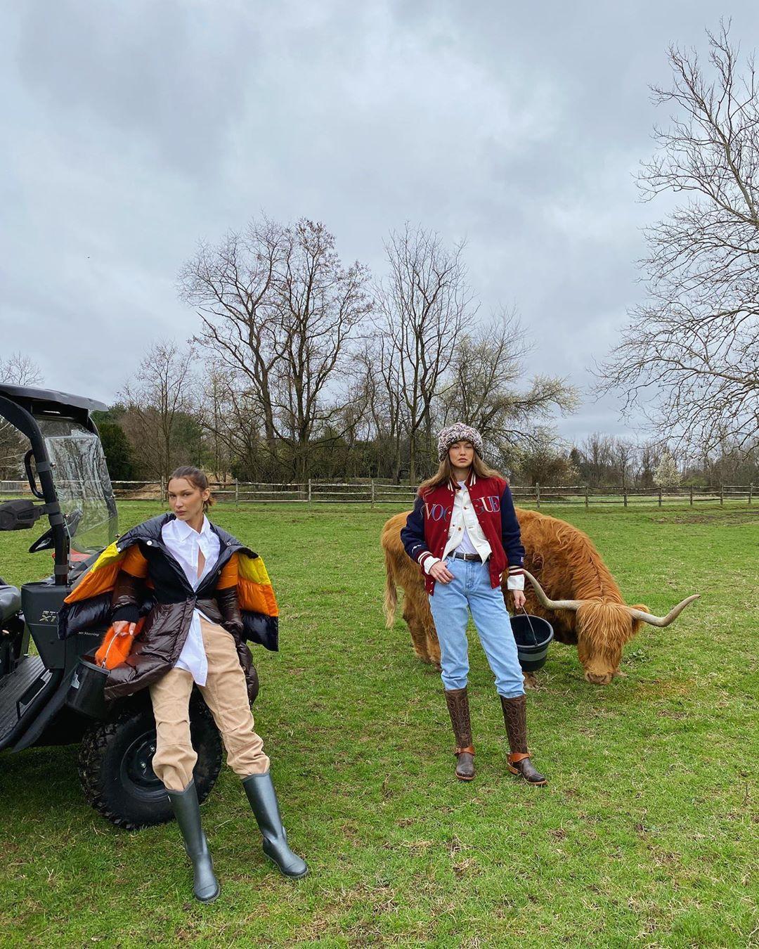 Белла и Джиджи Хадид приняли участие в фотосессии с бизонами
