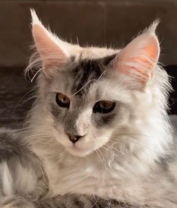 Ксения Бородина рассказала, почему кот Шанти больше не живёт в её доме