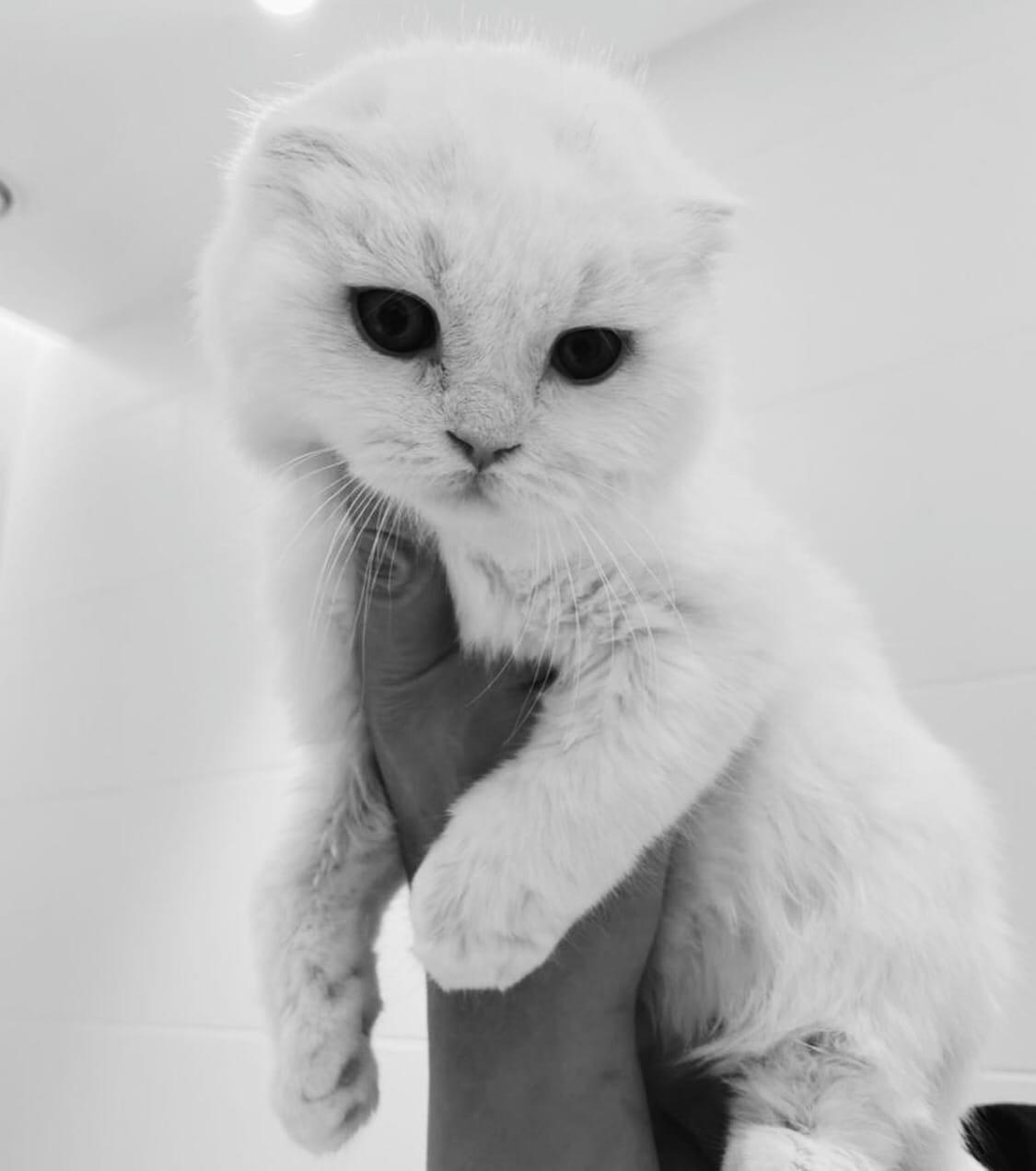Айза Долматова завела больного котенка